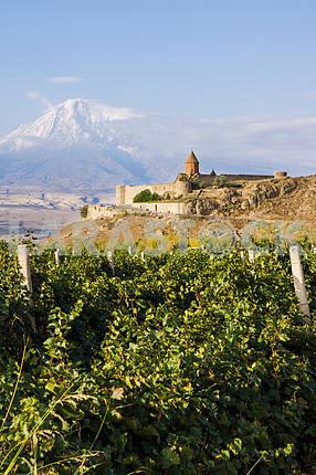 Панорамный вид на Хор Вирап и гору Арарат.