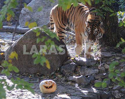 Хэллоуин в киевском зоопарке
