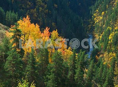 Деревья с желтой и красной листвой на скале