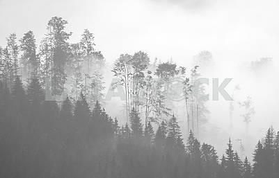 Живописный лес в тумане