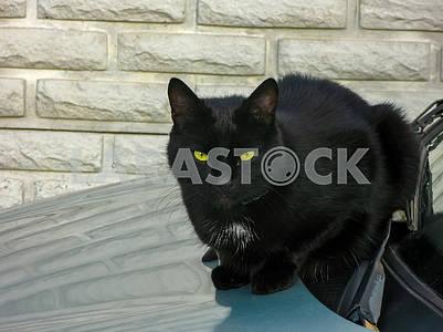 Черная кошка сидит на капоте автомобиля