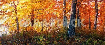 Золотые альпийские леса