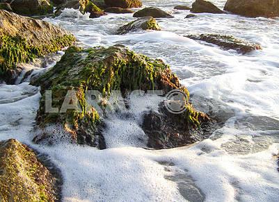 Морская пена на камнях
