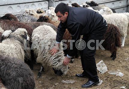 Мусульмане приносят в жертву барана на праздник Курбан-байрам