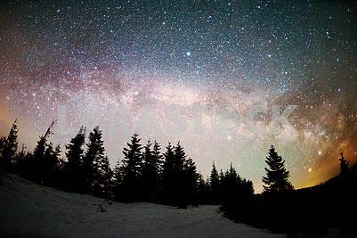 Млечный путь над елями