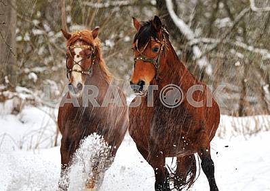 Лошади скачут по снегу