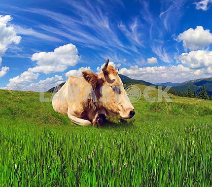 Cows and cloudsКоровы и облака