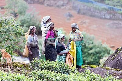 Женщины - сборщики чая на плантациях Шри-Ланки 21. 02.201