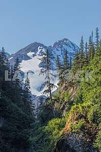 Лес у подножья снежной вершины