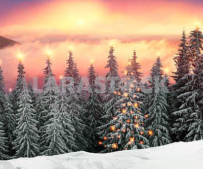 Морозный рассвет в Карпатах