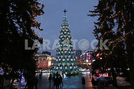 Новогодняя елка в Днепре