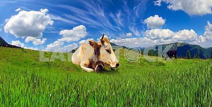 Коровы и облака