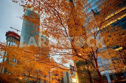 Осенний Торонто
