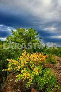 Растения. Урочище каскады летом, на фоне голубого неба