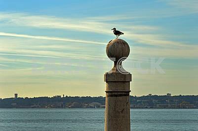 Самотня чайка на кам'яній кулі