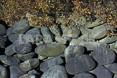 Большие камни под кустом