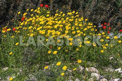 Цветы на Кипре
