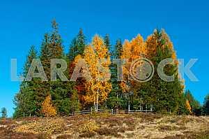 Красочный осенний ландшафт в горах.