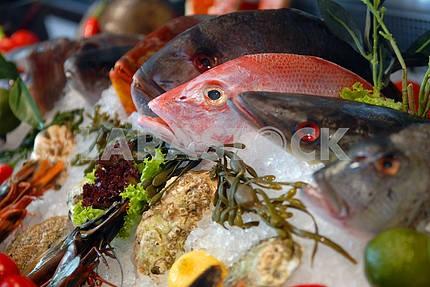 Витрина рыбы