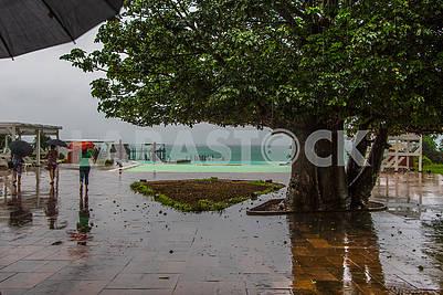 Дерево и люди под зонтами
