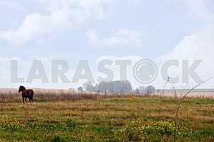 Лошадь на осеннем поле