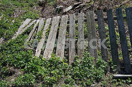 Старый поваленный деревянный забор