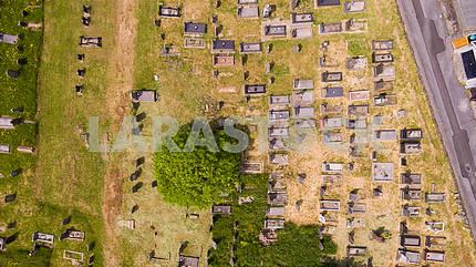 Глазное кладбище птиц