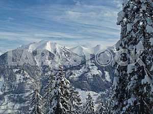 Снежные вершины Альп