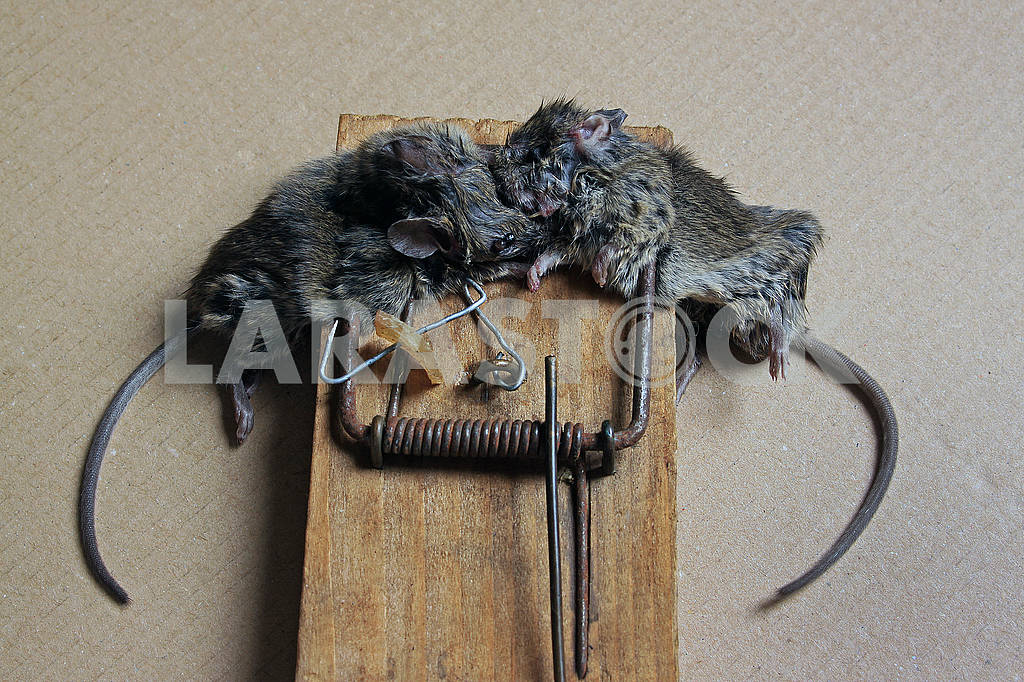 Two little dead mouse — Image 68700