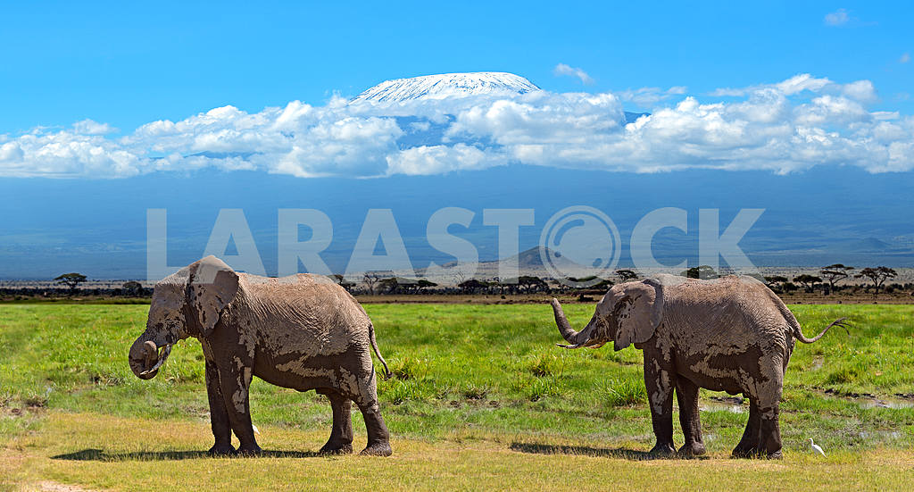 Mount Kilimanjaro and two elephants — Image 13250