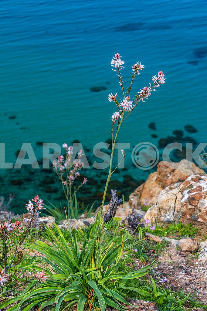 Flowers on the background of the sea — Image 66181