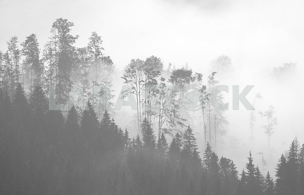 Picturesque forest in the fog — Image 63381