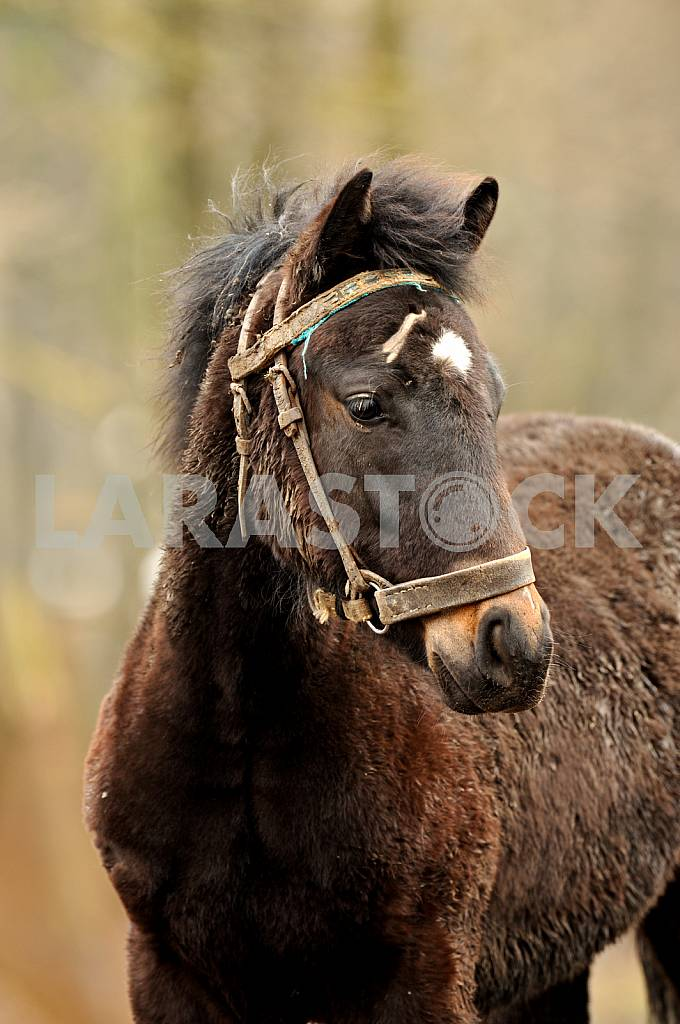 Horse bay. White mark on his forehead — Image 25102