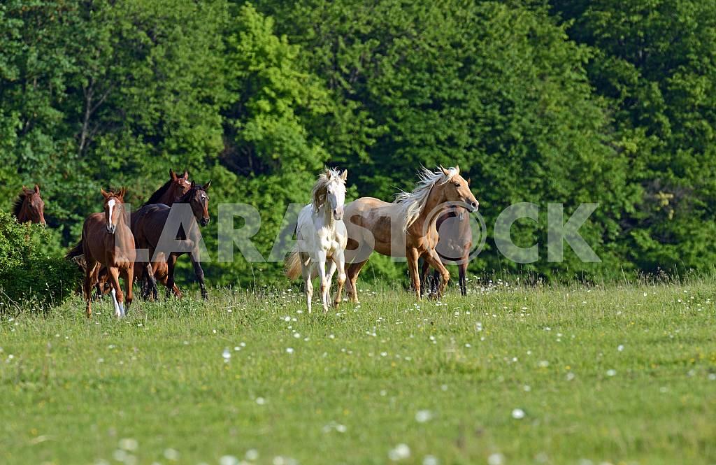 White, red, bay horses i — Image 25202