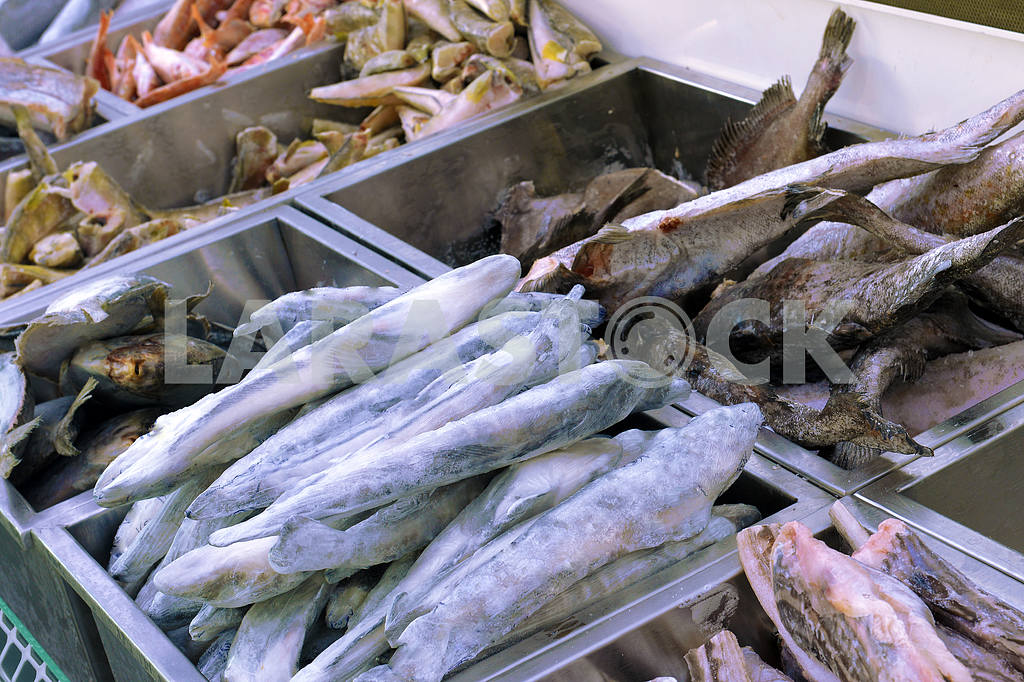 Frozen fish in the fish shop — Image 19432