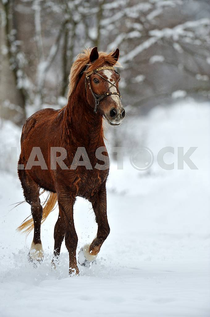 The horse is on the snow — Image 25362