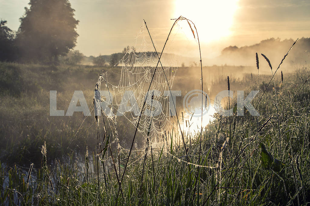 Beautiful natural summer background. the sun's rays pass through fog and tree. closeup drops of dew on the spiderweb at sunset sunrise — Image 70703
