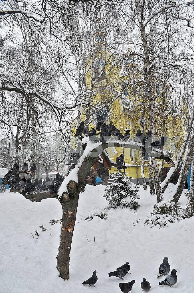 Rivne — Image 31523