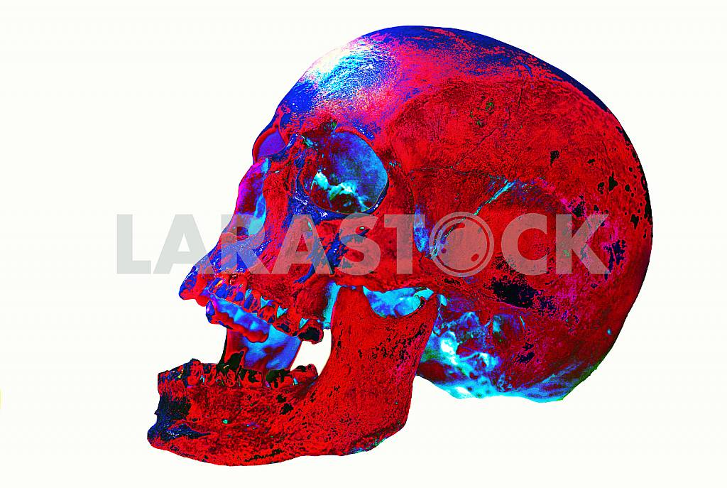 Colorful skull — Image 22553
