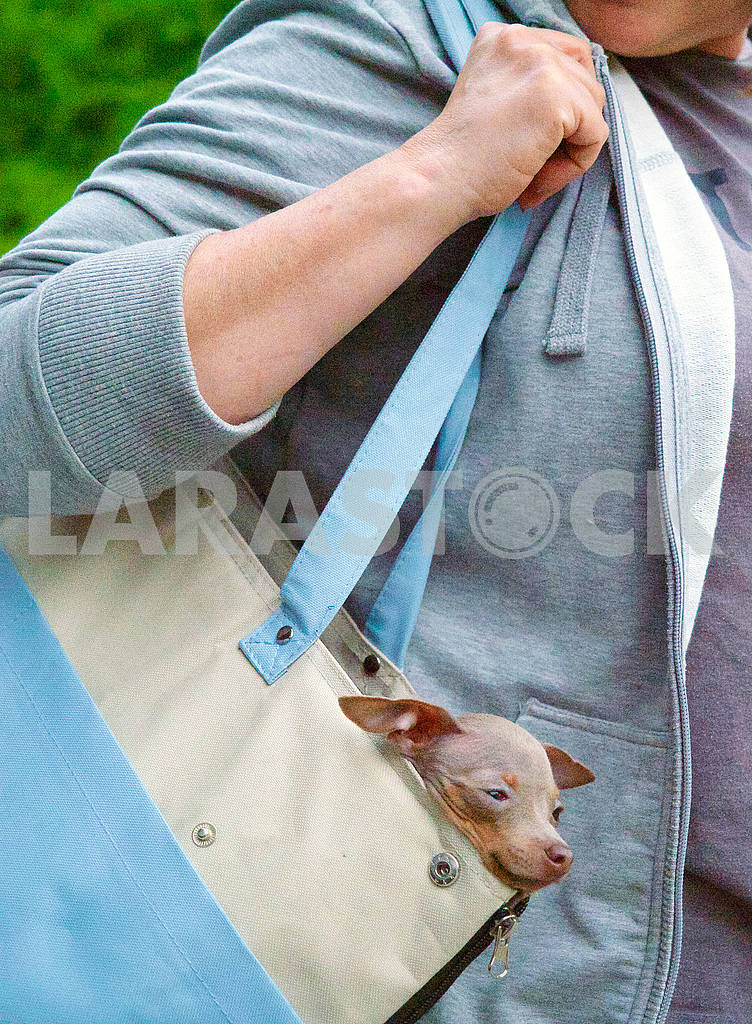 Dog in the bag — Image 70773