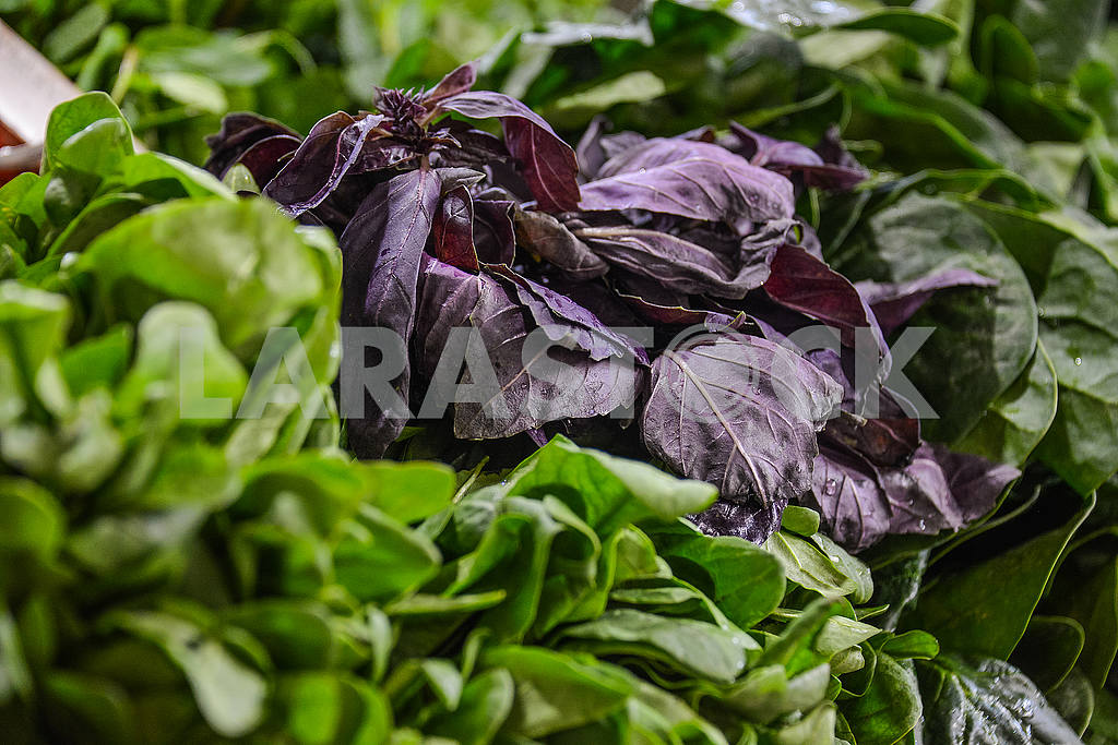 Bunch of basil next to sorrel on a counter. — Image 53393