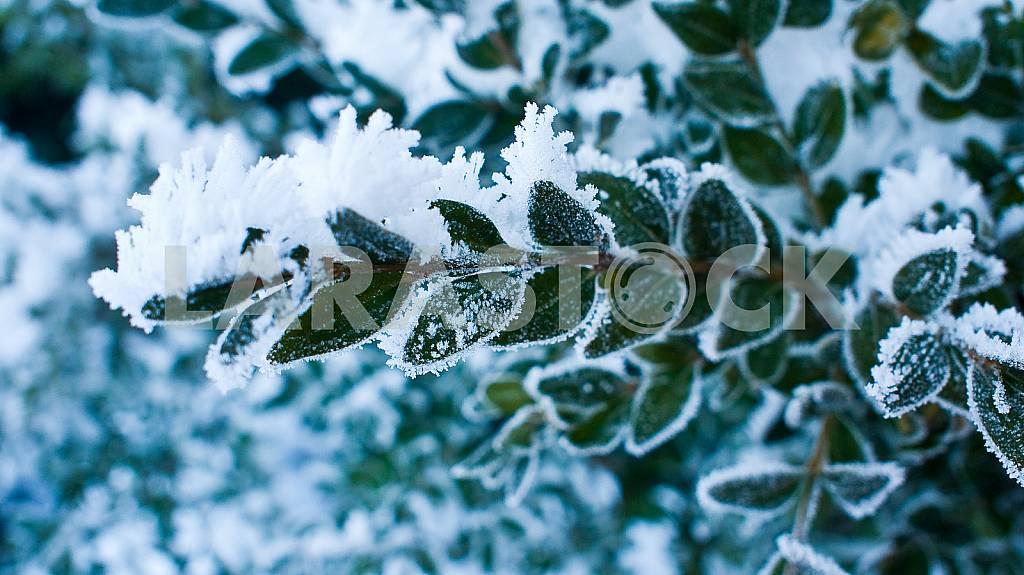 Frosty patterns on the bushes — Image 22504