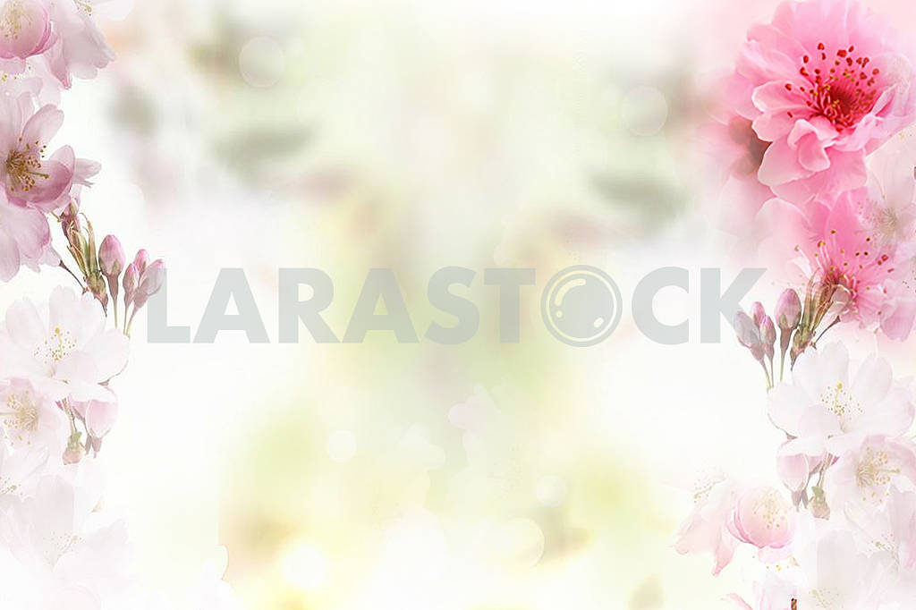 Delicate light background, large pink flowers at the edges of the image — Image 81904