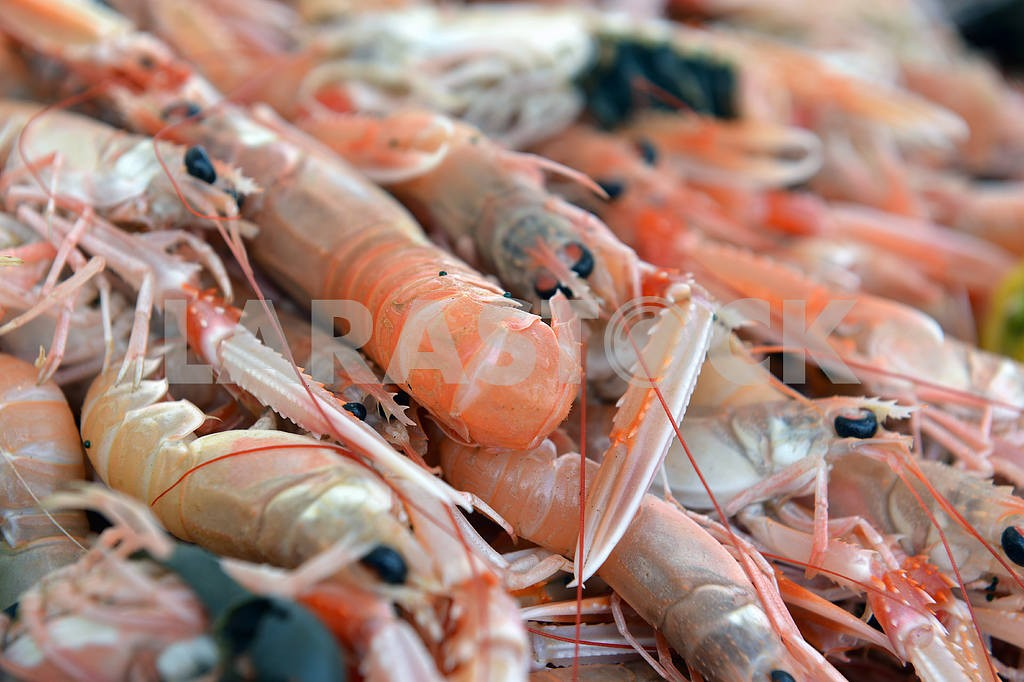 Shrimp on the counter — Image 17754