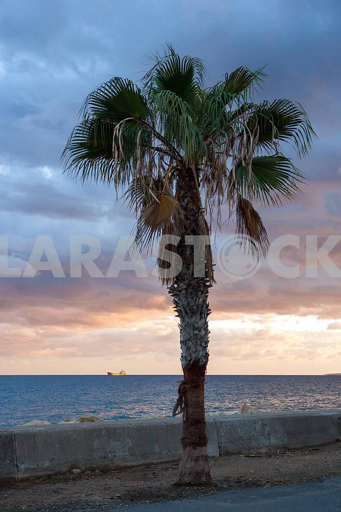 Palm tree on the beach — Image 20284