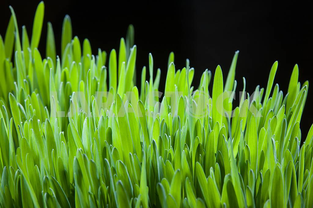 Bright green grass — Image 22605