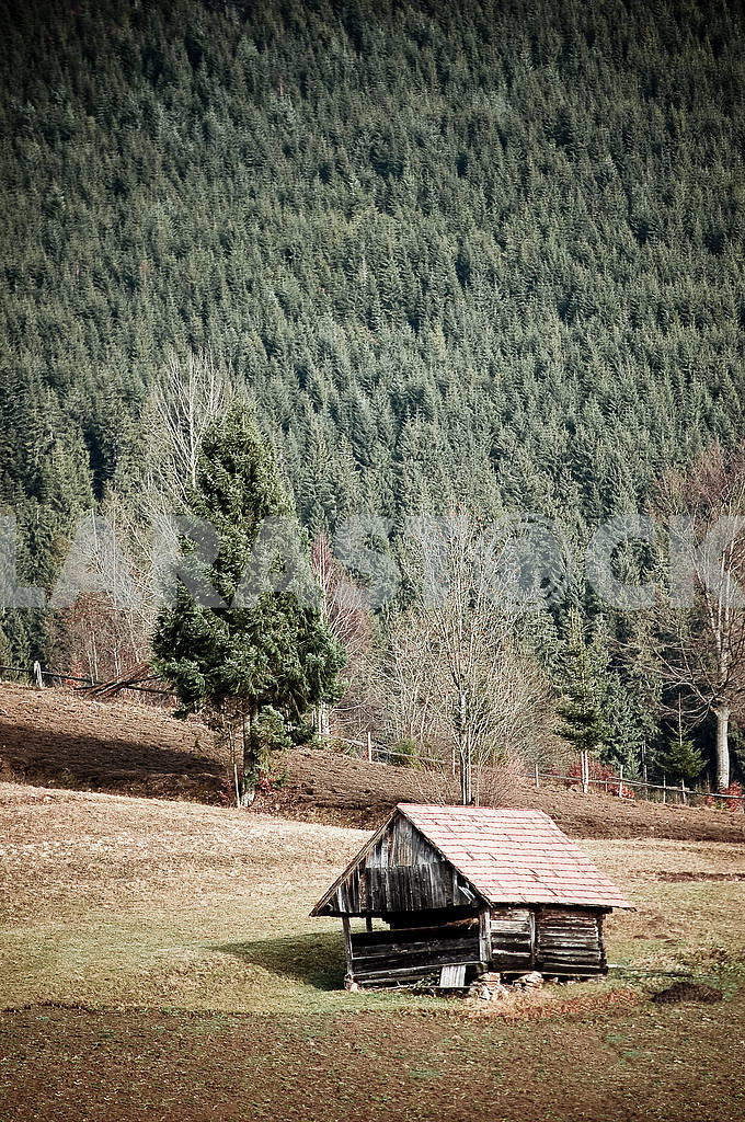 Hut in forest — Image 4235
