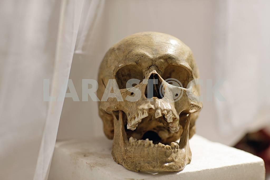 Human skull — Image 22606