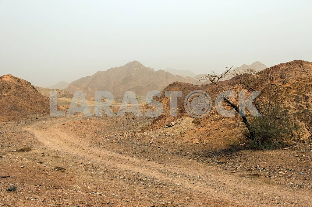 The road in the desert near Eilat — Image 30416