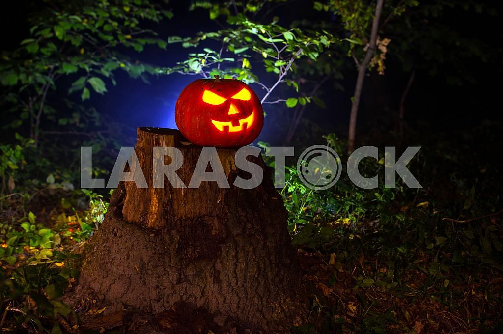 Halloween — Image 24166